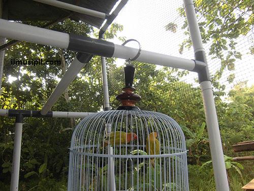 pipa PVC untuk rangka rumah burung
