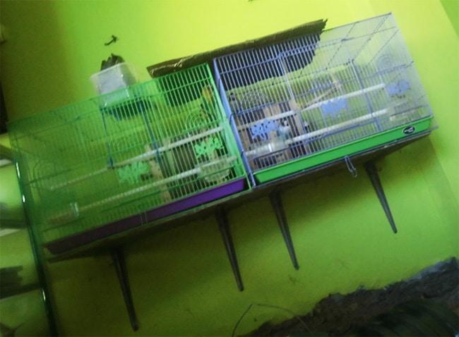 sangkar burung di dinding rumah